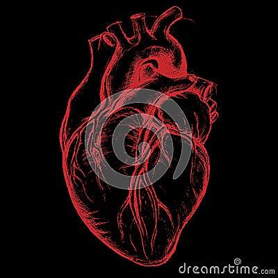 Dessin humain de coeur illustration de vecteur image - Dessin du coeur humain ...