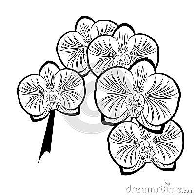 dessin noir et blanc des fleurs d 39 orchid e photos libres de droits image 34721838. Black Bedroom Furniture Sets. Home Design Ideas