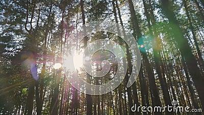 Destellos de la luz del sol a través de los árboles almacen de video