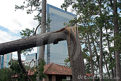 Destroyed Tree