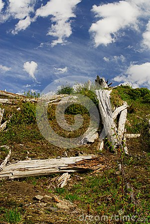 Destroyed trees