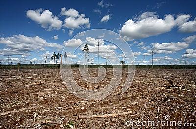 Destruction Forest Felling of natural forest