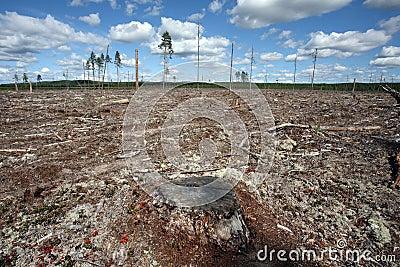 Destruction Forest Felling of natural forest, nort