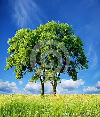 Detached tree