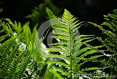 Detail of a fern