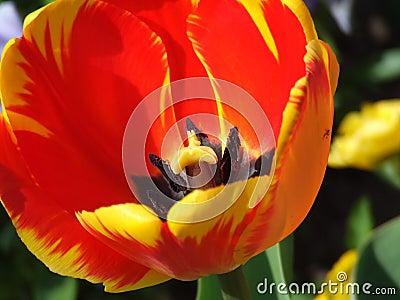 Detail Flower