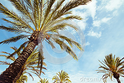 Palm tree in the sunshine