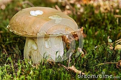 Detail of Mushroom
