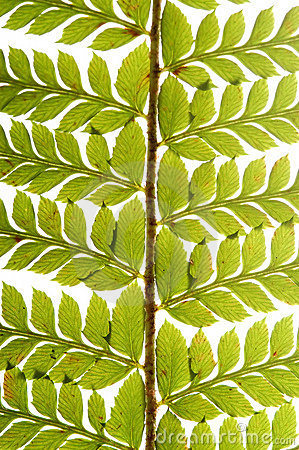 Free Detail Of Green Fern Stock Photo - 1469830