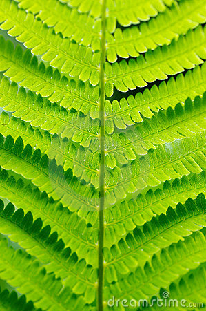 Free Detail Of Green Fern Royalty Free Stock Photos - 3516338