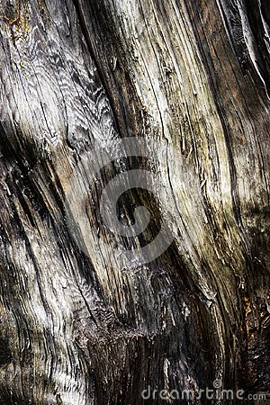Free Detail Of Old Stale Rotten Wood Stock Photos - 117361663