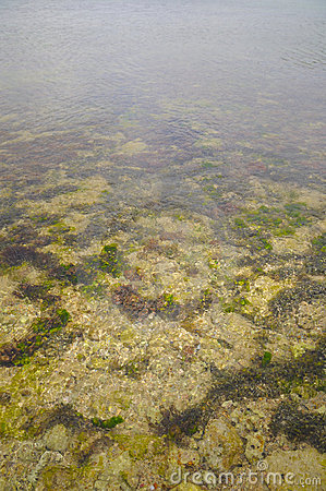 Free Detail Of Underwater Landscape Royalty Free Stock Photos - 4631258
