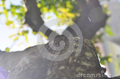 Detail texture of tree branch with bokeh effect Stock Photo