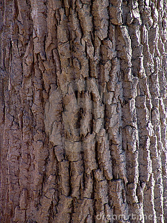 Detail of tree bark