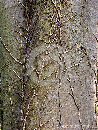 Detail of tree veins