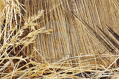 Detail of wooden cut texture and dry grass hay