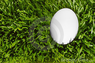 A Detailed Close Up Of A White Egg, Nestled In the Green Grass w