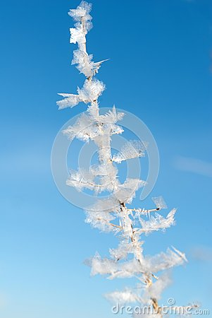 Detailed image of a frozen plant