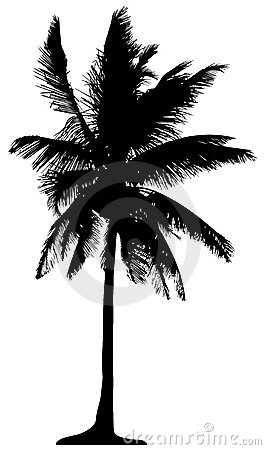 Free Detailed Palm Tree Stock Photography - 3981262