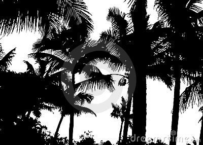 Detailed palm trees