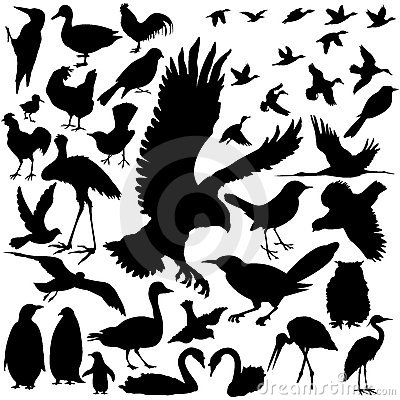 Free Detailed Vectoral Bird Silhouettes Royalty Free Stock Image - 8915756