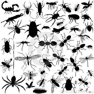 Detailed Vectoral Bug Silhouettes