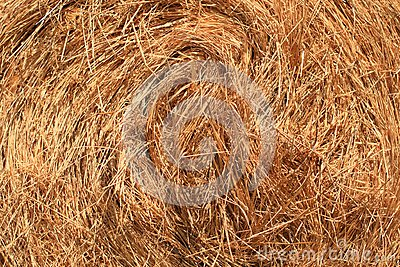 Detailed View of Hay