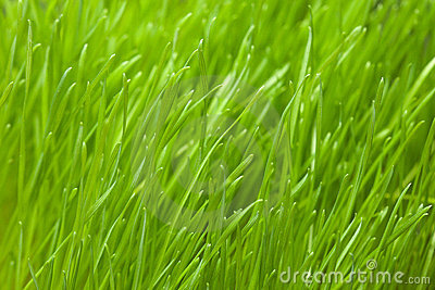 Details of green grass