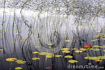 Details of pond in autumn