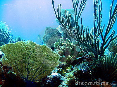 Details of sea coral