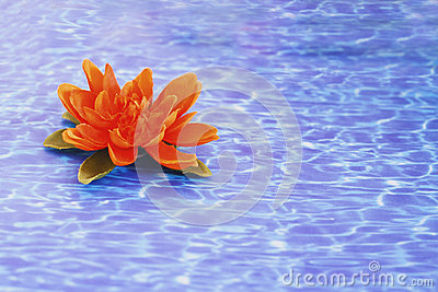 Details of daily spa, water lily on water texture