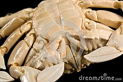 Detalhe de um caranguejo da lua