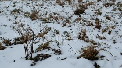Detalhes de prados do inverno vídeos de arquivo