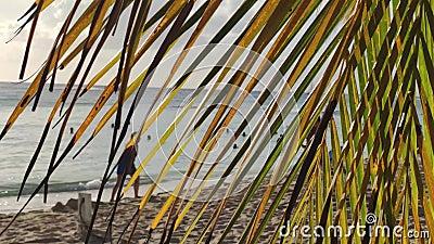 Detalle de hojas de palmera en la playa 2 metrajes