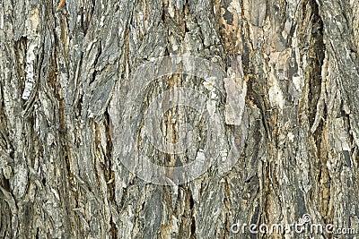 Detalle de la corteza de árbol