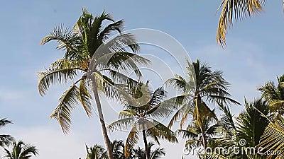 Detalle de palmeras 2 almacen de video