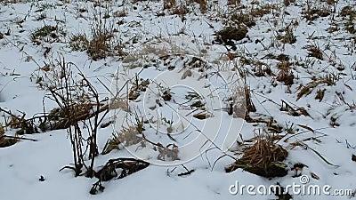 Detalles de los prados del invierno almacen de metraje de vídeo