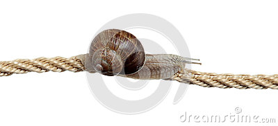 Determined snail on rope