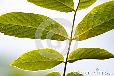 Detrás de hojas