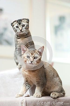 Deux chats