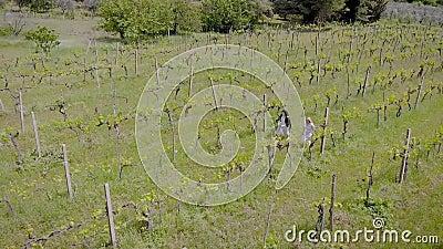 Deux femmes flânent sur la plantation de raisin dans des usines de jour d'été, de vue aérienne, de visionnement et des arbustes banque de vidéos