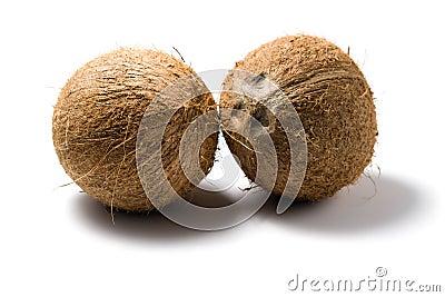 Deux noix de coco d isolement