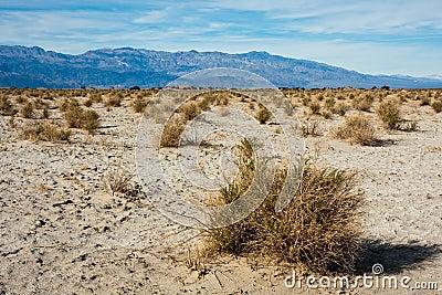 Devil s Cornfield in Death Valley