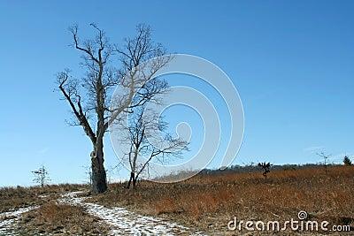 Devils tree