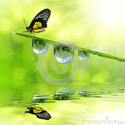 Dew and butterfly