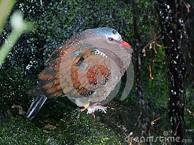 Dew covered pigeon