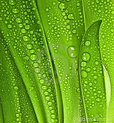 Free Dew Drop On Leaves Stock Photos - 17959493