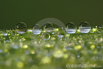 Dew droplets on grass blade - macro