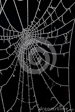 Free Dew Drops Frozen In The Cobweb Stock Photography - 119282162