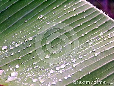 Dew drops on green